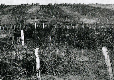 Cambrai barbed wire